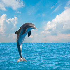 one jumping dolphins