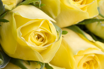 Close up image of beautiful yellow roses