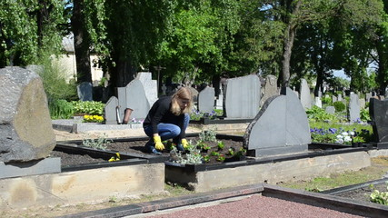 girl daughter plant flowers on father grave in cemetery