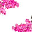 orchideas frame