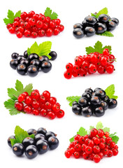 Set of currant