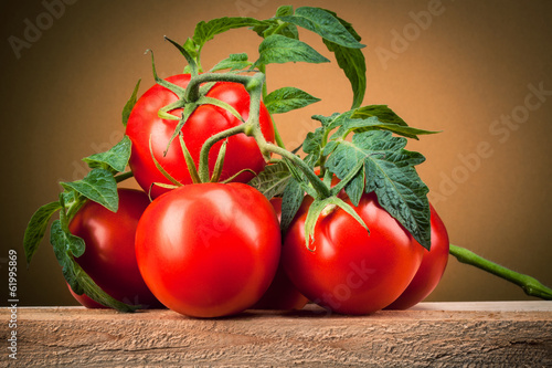 Organic tomato. Branch with leaves