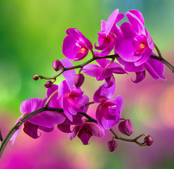 purple orchid flower on blur background © Pellinni