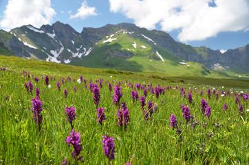 Alpine meadow. Melchsee-Frutt, Switzerland