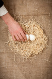 Closeup shot of men hand taking one white egg from nest