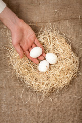 Closeup photo of men hand putting one white egg in the nest