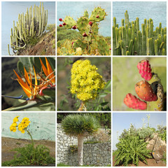 Canary Islands flora collage