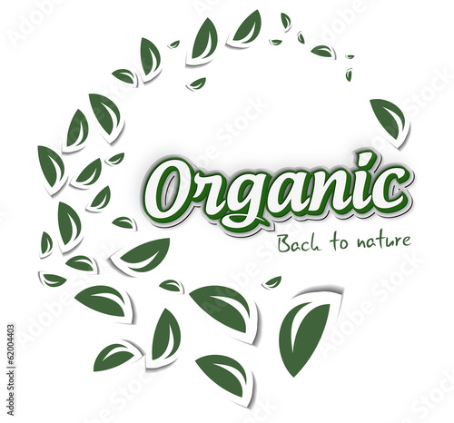 Green organic label with leaves on white, vector illustration