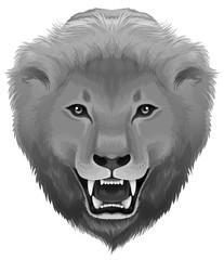 A grey lion