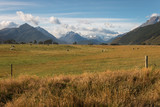 grassland in Mount Aspiring National Park