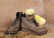 Boot climbing easter chicks