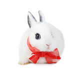 rabbit with  red ribbon