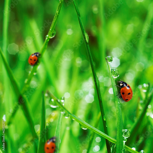 fresh green grass with water drops
