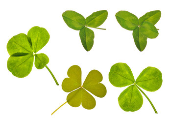 clover leaves collection isolated on white