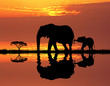 canvas print picture - elephant with baby elephant