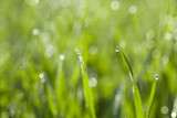 Drops of dew on the fresh grass