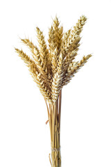 Manojo de espigas de trigo aisladas sobre fondo blanco