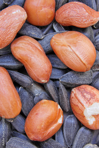 Sunflower Seeds and Groundnuts (Arachis hypogaea)