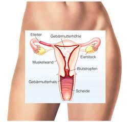 Gebärmutter.Menstruation.Periode