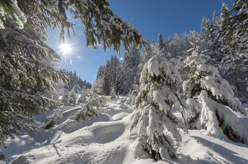Sunny day after fresh snowfall in the forest