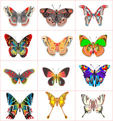 set insect butterflies on a white background