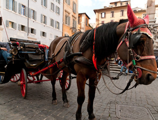Cavallo con carrozza a Roma