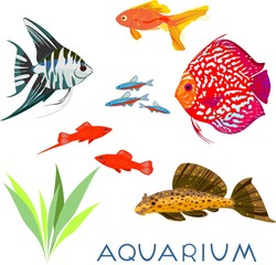 Set of different aquarium fish