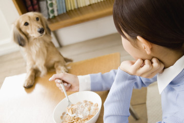 dog looking into woman having meal