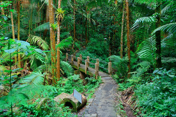 Tropical rain forest in San Juan