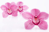 Three pink orchid on white background