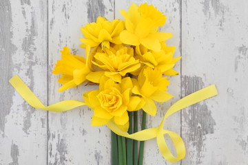 Spring Daffodil Beauty