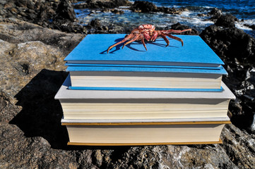 Orange Crab on Blue Books