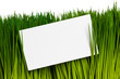 Business Card and green grass