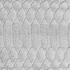 discolored lizard skin closeup