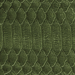 pattern of green snake skin closeup