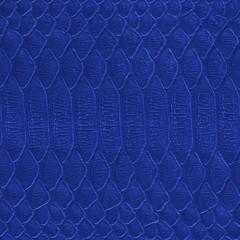 blue reptilian  skin closeup