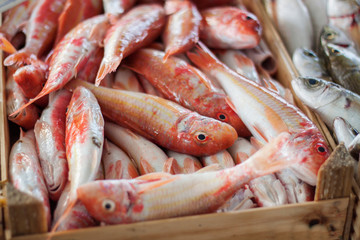 Fresh fish at fish market