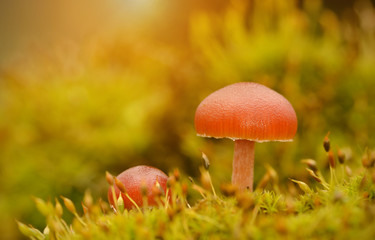 Mushroom on the mossy ground at sunset