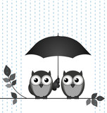 Two owls sheltering from the rain sat on a branch