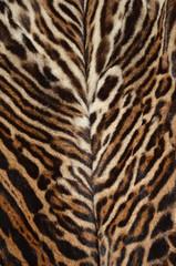 pelliccia di ocelotto