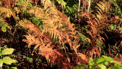 Closer image of the withered ferns