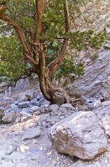 Rocky soil of Samaria gorge