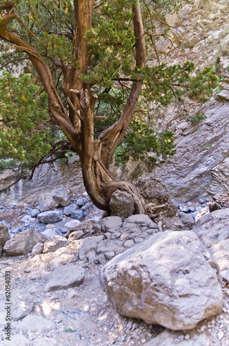 Rocky soil of Samaria gorge
