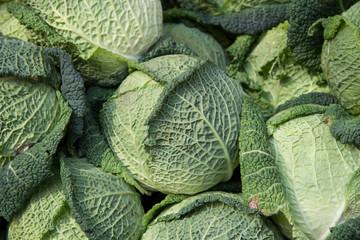 Savoy cabbage - Verza