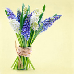 Bouquet of grape hyacinth flowers