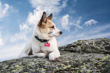 dog on a rock