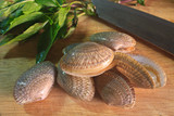 surf clam on wooden for cooking