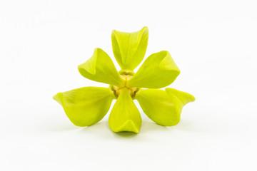 Ylang-Ylang Flower.