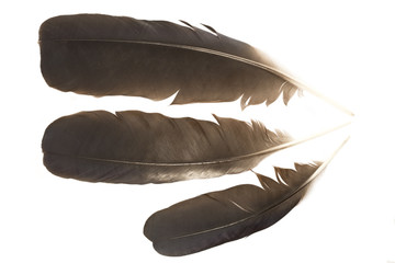 Raven feathers