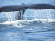 whale tail and horizontal flukes